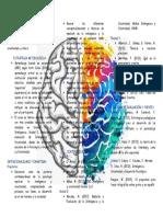 folleto promocional inteligencia y creatividad