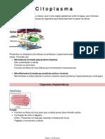 C i t o p l a s m a.pdf