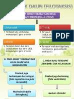 filotaksis-1.pptx