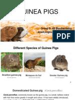 GUINEA-PIGS.pptx