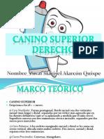 Canino Superior Derecho