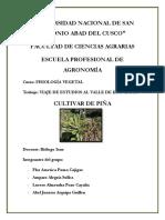 Cultivar de Piña. Pillcopata