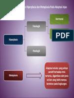 Hiperplasia Dan Metaplasia