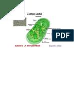 actividad fotosintesis