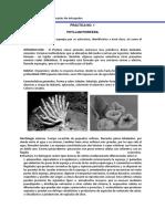Guía Didáctica de Invertebrados No Artrópodos
