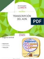 1.2-Transcripcion-y-Traduccion.pptx