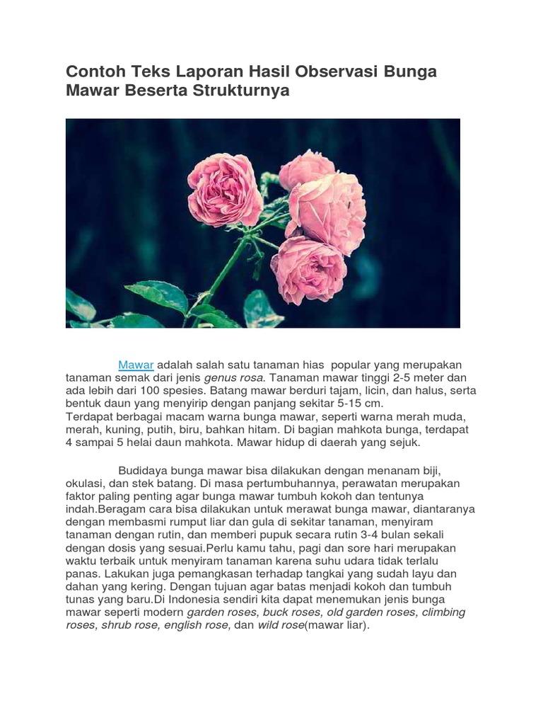 Contoh Teks Observasi Tentang Bunga Mawar Berbagai Teks Penting