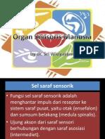 276980566-PPT-Organ-Sensoris-Anatomi-Fisiologi.pptx