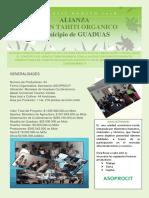 Alianza -Asoprocit Primer Boletin 2 (1)