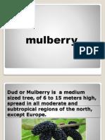 MULBERRY_(2).pptx