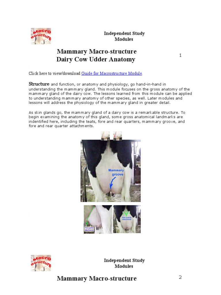 Mammary Gland University Of Illinois Edema Lymphatic System