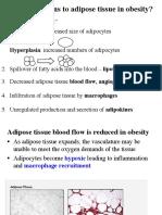 Obesity2 Adipose Tissue Biology Adipokines_F17.pdf