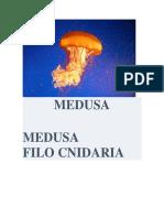 MEDUSA.docx