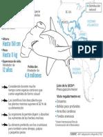 No todos los tiburones se alimentan solo de carne