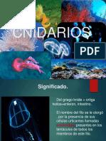 Cnidarios