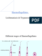 hemoflagellates.ppt