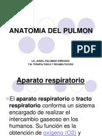 Clase 11 - Anatomia Humana