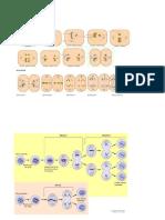 División celular I.doc