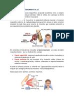 ANATOMÍA MICROSCÓPICA MUSCULAR.docx