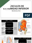 Musculos extremidad inferior