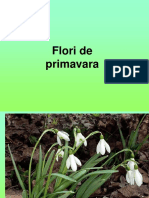 2_flori_de_primavara[1].ppt