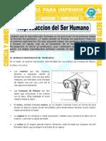 Ficha-Reproduccion-del-Ser-Humano-para-Sexto-de-Primaria.doc