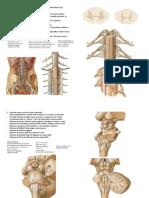 P2 + prova prática de neuroanatomia.pdf