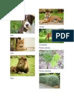 5 ANIMALES.docx