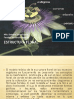 Estructura Floral