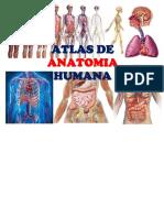 Atlas de Anatomia humana - edwin Ambulodegui