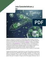 Reino Protista Características y Clasificación