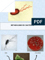 2MTClase Metabolismo Bacteriano.