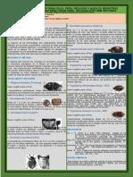 Poster Cientifico Dermestidae