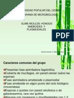 8.hongos_ameboides