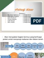 morfologi akar by kel 2.pptx