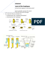Esophagus Trachea Development n Its Pathologies Compiled