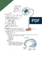 Neuro Intro Study Guide