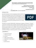 El axolotl aparece ligado a los más antiguos mitos mexicanos.docx