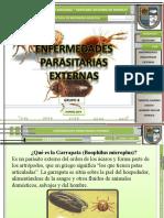 enfermedades parasitarias externas