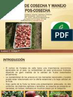 Riego en Frutales PDF