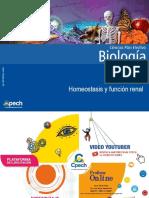 PPT Clase 7 Homeostasis y función renal.ppt