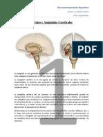 Instinto y Amigdala Cerebral