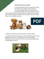 Cuántos Animales Domesticados Tenemos en Bolivia
