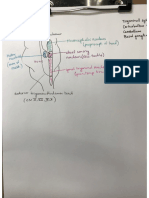 Trigeminal Nuclei