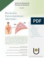 catecolaminas.pdf