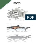 Estructura de los Peces y Anfibios