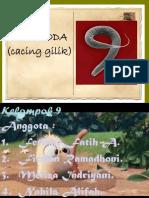 (6) Nematoda 7