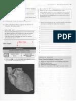 APR Worksheets - Heart