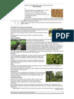 Boas Práticas Na Preparação, Plantio e Pós Plantio de Neem Indiano v.2