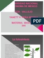 Y.Peña_Present.fotosin